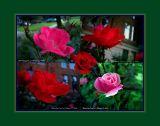 Flower Power Squared.JPG