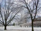 Recent Ice Storm.