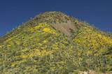 The Arizona Desert  2008