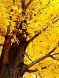 10-26-02 Roundtop Fall Colors Dsc00172.jpg