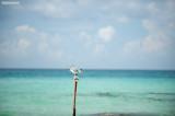 A little bird on the pole