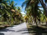 Palmtree aisle