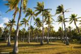 Column of palmtree