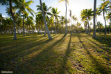 Shadow of palmtrees