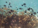 lagoonarium