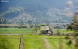 rice field through a car window