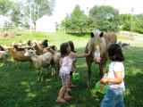 Farmhand Birthday Party