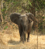 Our first trip to Africa, August 2006.