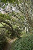 The path up / Stien op