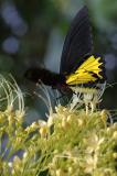 Butterfly-Park-Butterfly-2.jpg