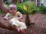 Baby girl baby palm
