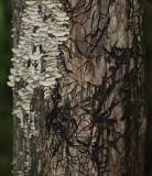 Mycelia Abstract