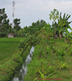 Irrigation Canals Needed for Rice Terraces