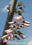 Legume Blossum's Pastels