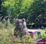 Roadside Bear