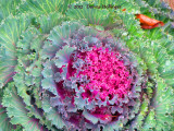 Kale in the Garden