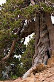 Cyprus Visit