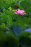 Spotlight On Lotus