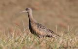 Cranes, Herons and Shorebirds