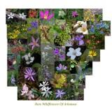 Arkansas'  Rare and Endemic Vascular Flora