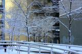 Winter wonderland...The city after the snow fall....