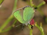 Årets fjärilar - Butterflies and moths 2009