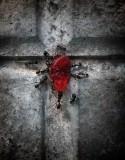 gominola roja