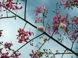 flores y algodón