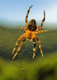 Spider's Web_0819.jpg