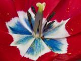Das Herz der Tulpe_1046.jpg