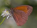 Butterfly_2721.jpg