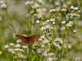 Butterfly_2702.jpg