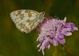 Butterfly_2426.jpg