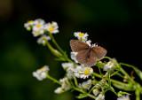 Butterfly_2930.jpg