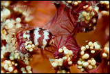 lembeh_choices