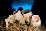 toberlone tunnel cave sponges