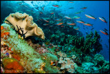 busy reef