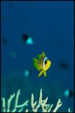 Nemo on blue