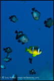 Nemo & friends