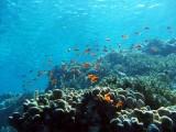 Reef, Sharm 2005