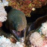 Grrr, hungry Moray, 2006
