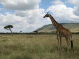 Kenia & Tanzania 2007