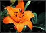 IMG_1410-01-5x7.jpg