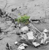 Life amid the rubbish