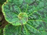 leaf-058