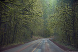 Forest Canopy - Oregon Hwy 20