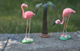 Flamingo! - the kind we see in Oregon