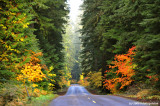Fall Colors in The Cascades
