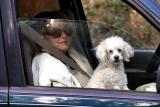 Carol and Rosie out for a ride