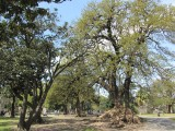 at the Parque Lezama
